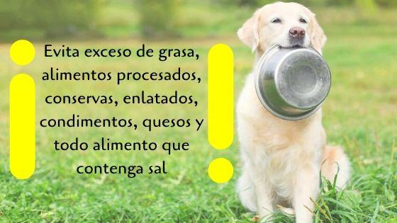 dieta natural perros cardiopatas