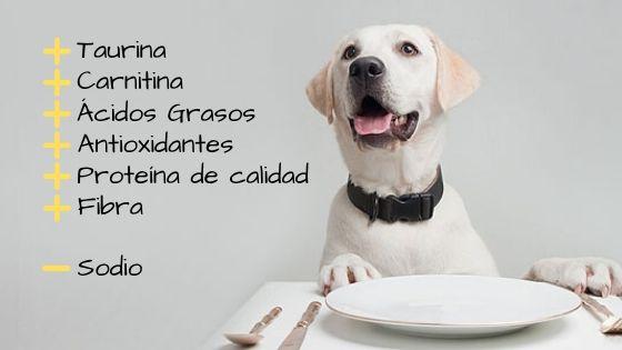 sitnomas de insuficiencia cardiaca terminal en perros