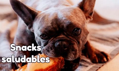 snacks saludables para perros