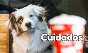 dieta natural perros cuidados