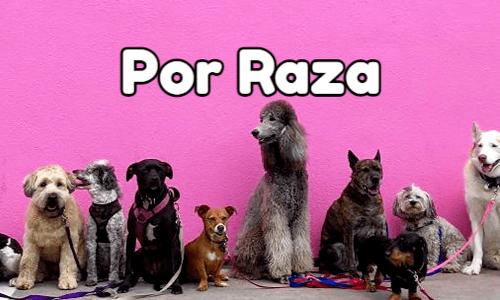 comida casera para perros por raza