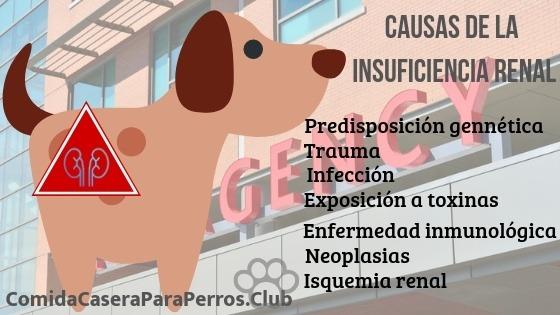 insuficiencia renal en perros sintomas