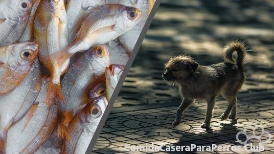Los perros pueden comer mariscos