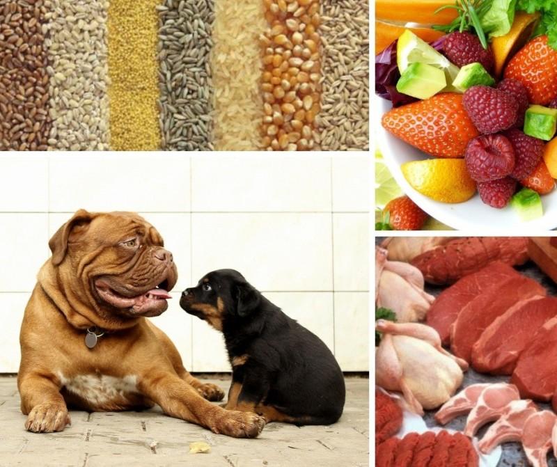 comida casera para perros cantidades