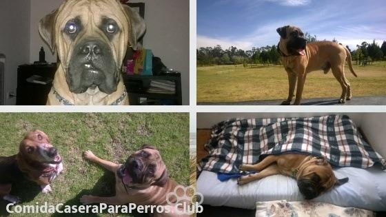 insuficiencia renal en perros jovenes