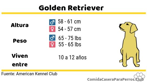 caracteristicas del golden retriever