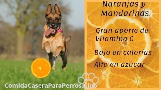 los perros pueden comer naranja y mandarina
