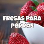 los perros pueden comer fresas
