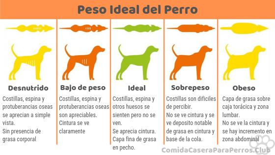 tabla peso ideal perro