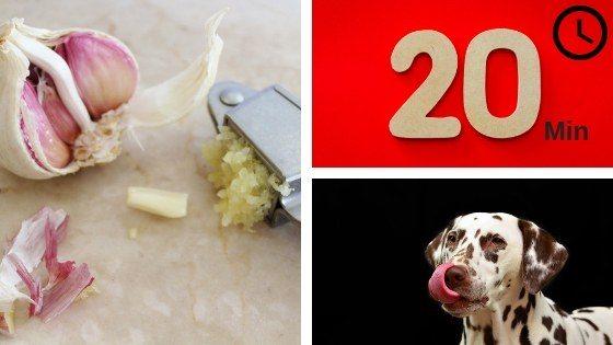 Dosificación del ajo en perros