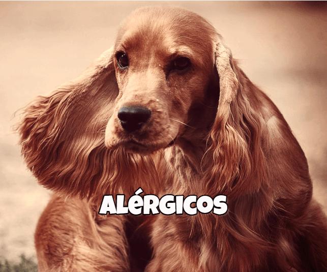 alimento natural perros alergicos