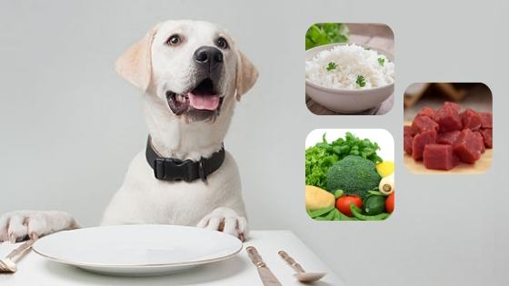 cantidad de arroz para perros