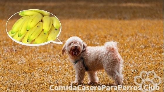 cuanto platano debe comer un perro