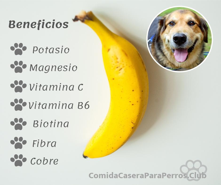 los perros pueden comer banana