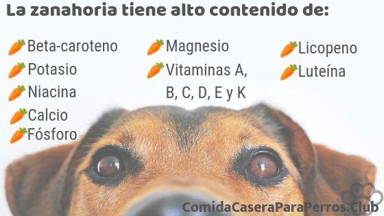 que pasa si le das zanahoria a un perro