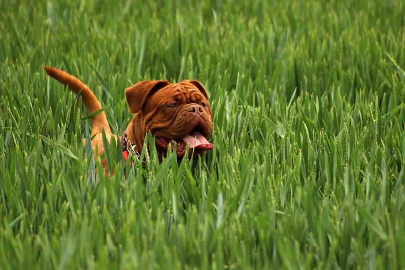 dieta cruda para perros por raza