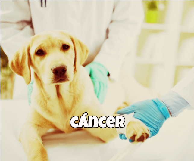 alimento natural perros con cancer
