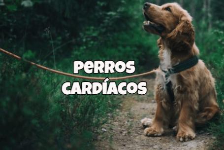 comida casera para perros enfermos del corazon