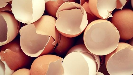 cascaras de huevo para perros