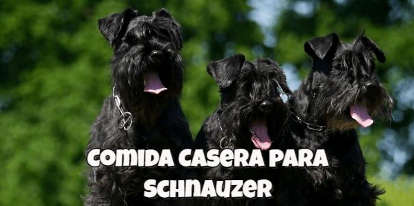 comida casera para perros schnauzer