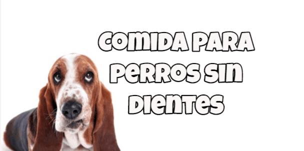 comida para perros sin dientes concejos