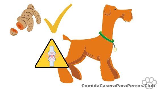 pasta de curcuma para perro
