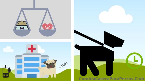 control de la diabetes en perros