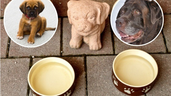 horario comida perro