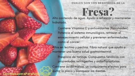Beneficios de las fresas para perros
