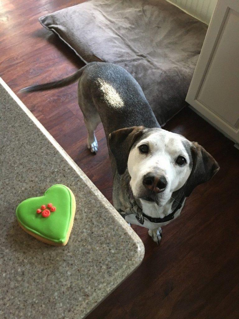 snacks para perros caseros