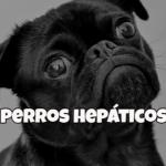 comida casera para perros herpaticos