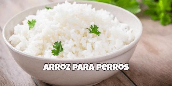 los perros pueden comer arroz