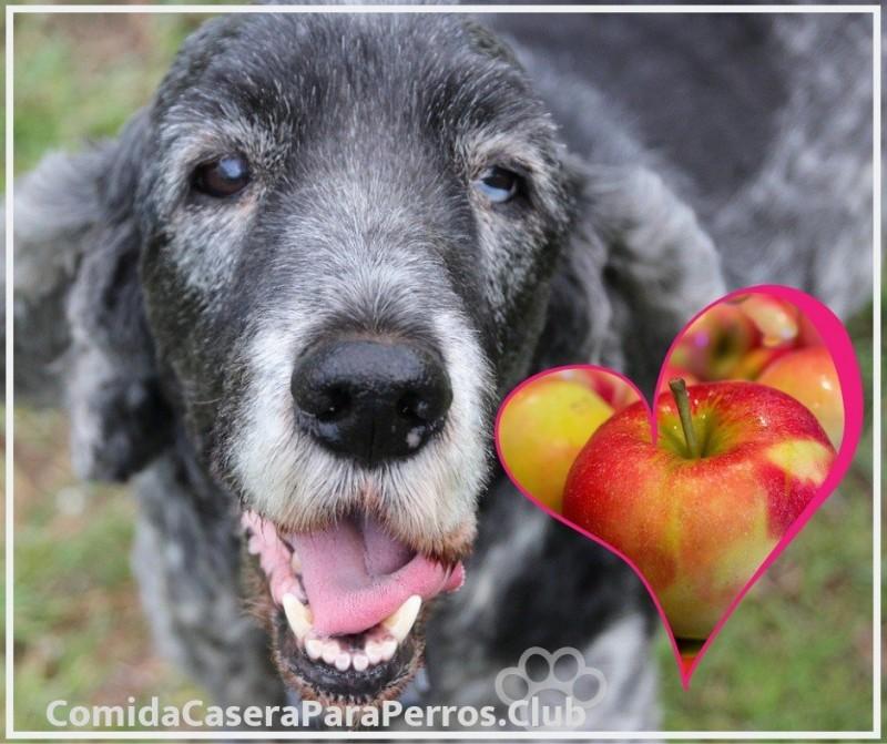 dosis recomendada de manzana para perros