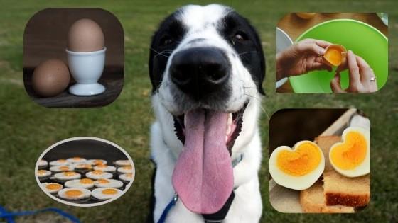 Los perros pueden comer huevo