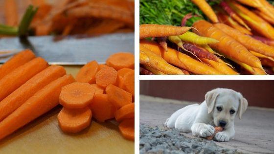 beneficios de la zanahoria para tu perro