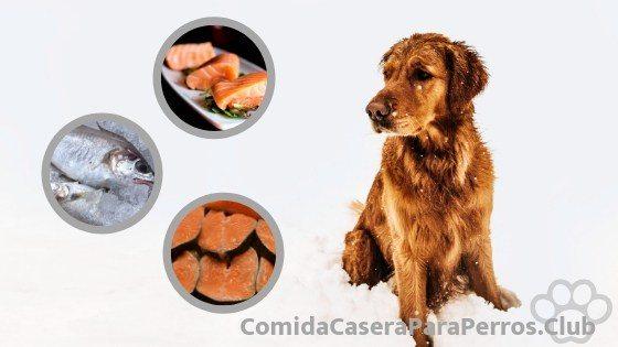 Los perros pueden comer atun