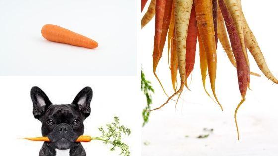 pueden comer zanahoria los perros