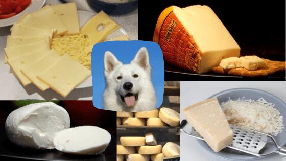 los perros no pueden comer queso