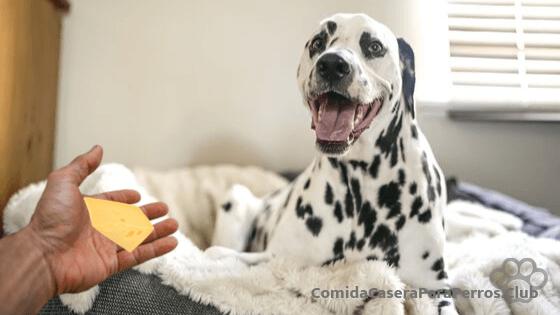quesos para perros