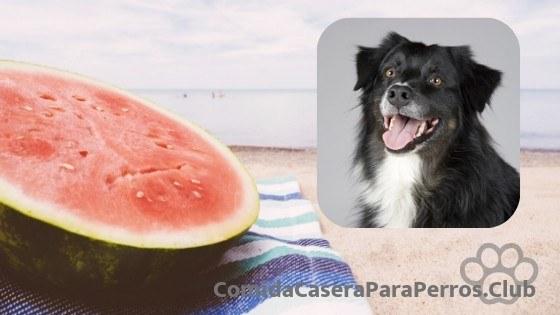 perro puede comer sandia