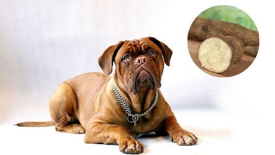 los perros pueden comer tapioca